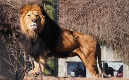 King of the Zoo