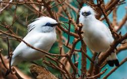 The White couple