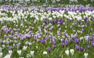 Springtime in Kings Garden.