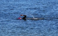 Swimming at Amager Strandpark